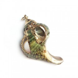 Shell Pendant with Metal  (~24x38mm)
