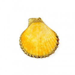 Sea Shell Pendant Plated (~40x44mm)