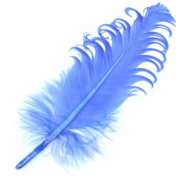 Feather  ~15-20cm (mixed sizes)