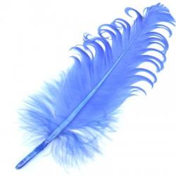 Φτερό ~15-20cm